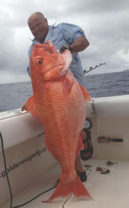 Ruby Snapper caught onboard Golden Eagle while fishing Kadavu waters.