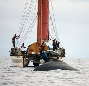 Whale and dolphin monitoring project for Fiji
