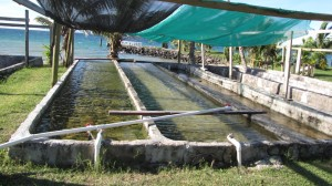 Mariculture at Makogai