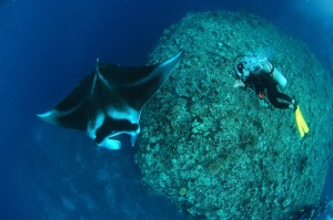 Diving with Mantas at Wakaya Photo: Brigitte Dewhirst